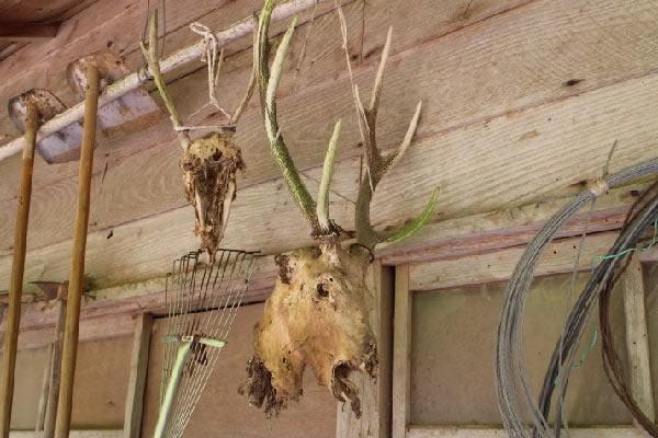 民家の軒先に鹿の首ぶらさがっている!?