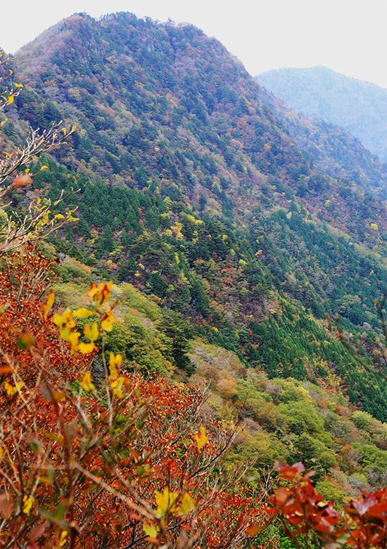 三ツ森山の紅葉