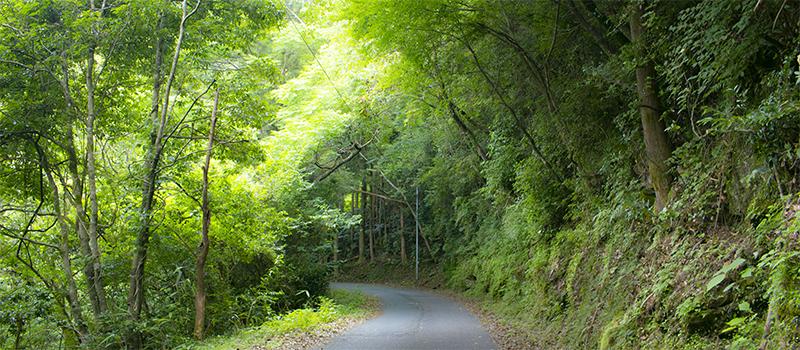 【サップリング】木漏れ日の小道サイクリング
