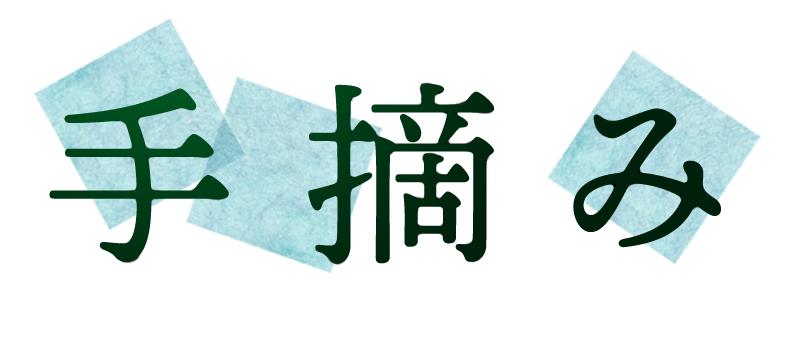 玉緑茶:手摘み