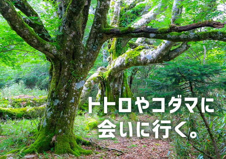 【初心者歓迎】大座礼山往復登山