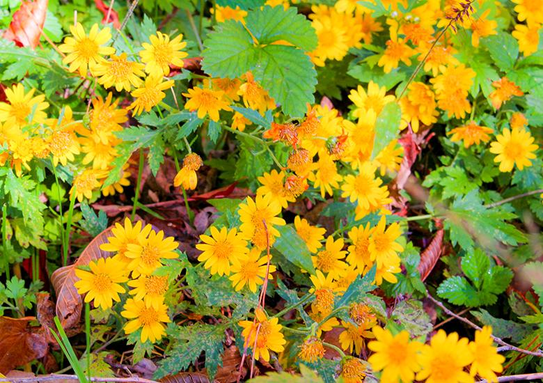 【秋の自然みつけ散歩】秋に咲く花も!